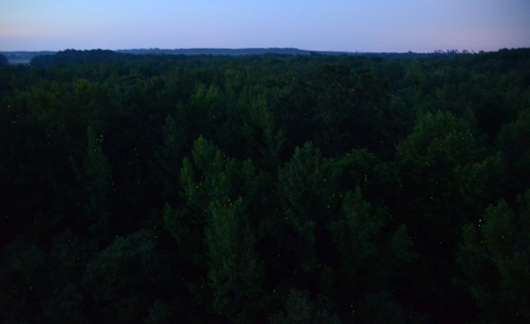 Fireflies in the valley, High Bridge State Park