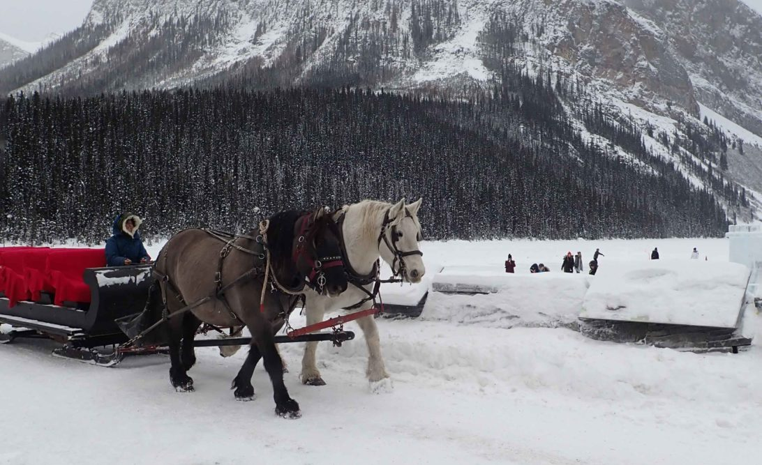 Horse drawn sled at Lake Louise with Fairview Mountain in background