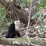 Monkey sitting on log in jungle